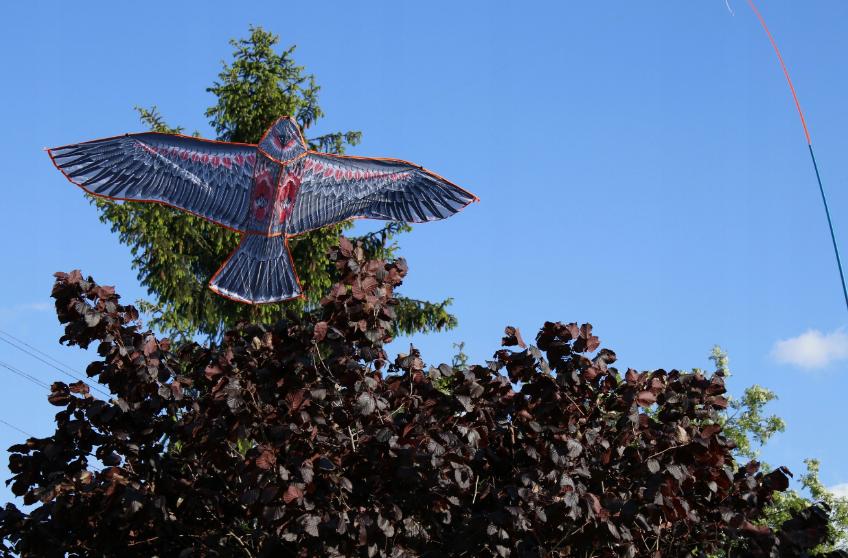 отпугиватель птиц феникс